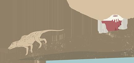 第二大主題-新生代海洋哺乳類的輻輳演化